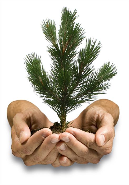 Harmonisierende Körperlotion von PinusVital günstig bei kokku im veganen Onlineshop kaufen!